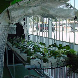 Nft Kit 54 Plant site